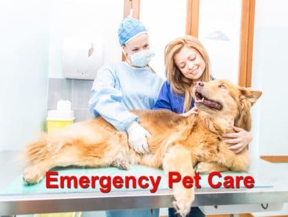 Emergency Pet Care