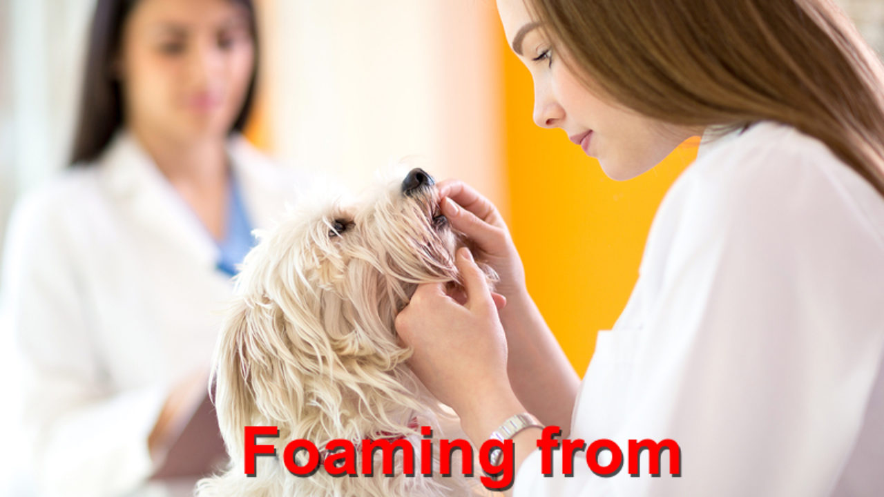 Foaming From The Mouth Emergency Animal Care Braselton