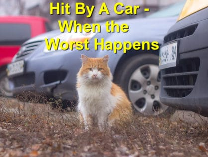 Hit By A Car – When the Worst Happens