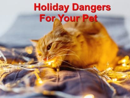 Holiday Dangers For Your Pet