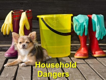 Household Dangers