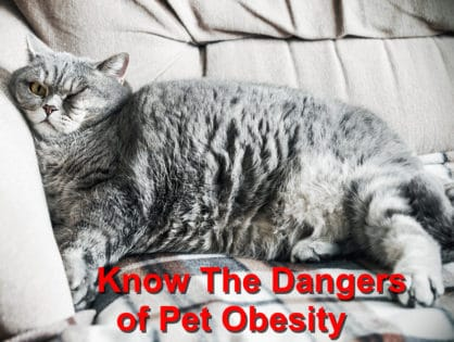 Know The Dangers of Pet Obesity