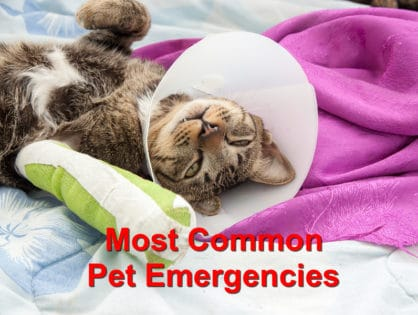 Most Common Pet Emergencies