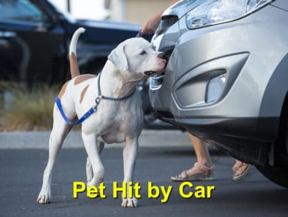 Pet Hit by Car