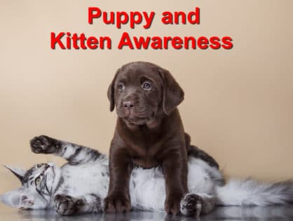 Puppy and Kitten Awareness