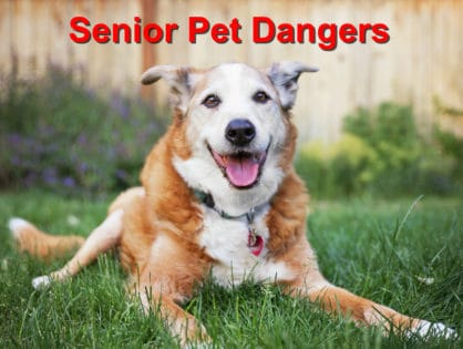 Senior Pet Dangers