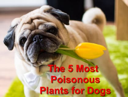 The 5 Most Poisonous Plants for Dogs
