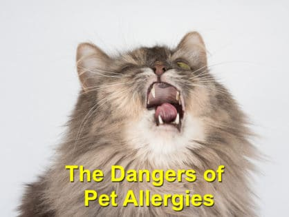The Dangers of Pet Allergies