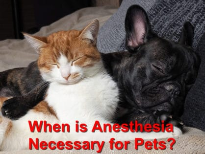 When is Anesthesia Necessary for Pets?